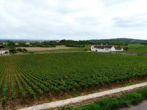 Rully Vineyards 2
