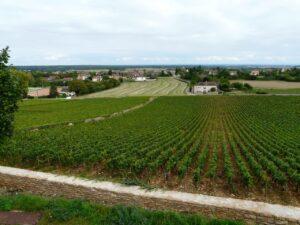 Rully Vineyards
